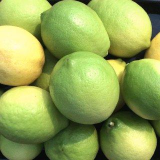 瀬戸内レモン 2kg サイズ混合 国産 ハウスレモン ノーワックス 夏レモン 一部地域送料無料