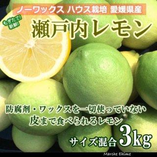 瀬戸内レモン 3kg 夏レモン ノーワックス 国産  いわぎレモン 青いレモンの島 地域限定送料無料