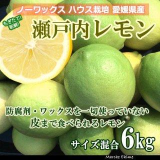 瀬戸内レモン 6kg 国産レモン ノーワックス 夏レモン いわぎレモン 青いレモンの島 地域限定送料無料