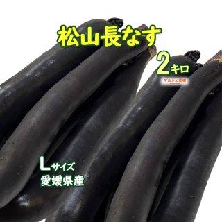松山長なす 2kg 約10本 サイズ混合 皮と実がやわらかい 愛媛 冷蔵便 一部地域送料無料