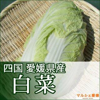白菜 1玉 はくさい