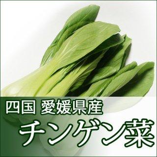 チンゲン菜 青梗菜 2束