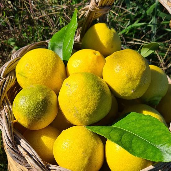 オルゴーゾロ・リクォーリ カル・リモーネ(レモンリキュール)