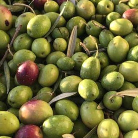 トレスリゾス ビオ<br>エクストラバージン オリーブオイル(500ml)