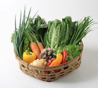 旬の野菜BOX Sサイズ