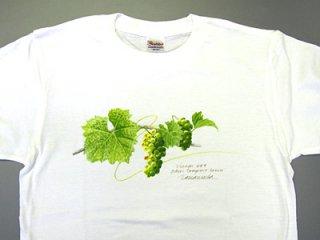 Tシャツ(日の当たるシャルドネ).abc