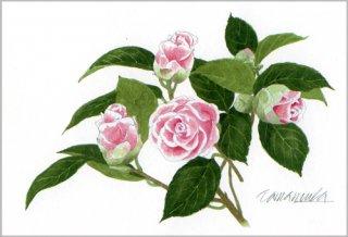 ポストカード「ピンクと白のツバキ」.abc
