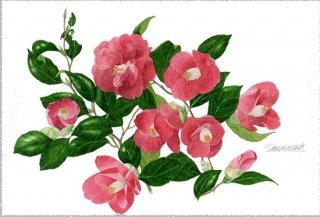 ポストカード「赤い花椿」.abc
