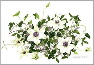 ポストカード「白と紫のテッセン」.abc