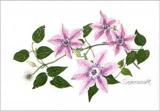 ポストカード「ガーデンのクレマチス」.abc
