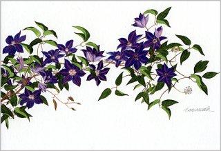 ポストカード「紫のクレマチス2007」.abc