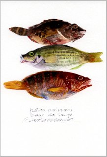 ポストカード「スープ用の小魚」.abc
