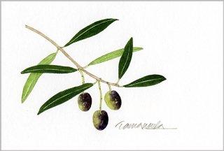 ポストカード「オリーブの小枝2」.abc