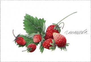 ポストカード「イチゴ -今朝の収穫」.abc