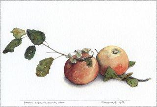 ポストカード「はじめて描いたリンゴ」.abc