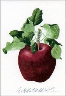 ポストカード「葉のついた赤りんご」.abc