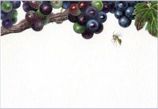 ポストカード「メルロー2003A」.abc