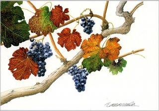 ポストカード「赤い葉のメルロー」.abc