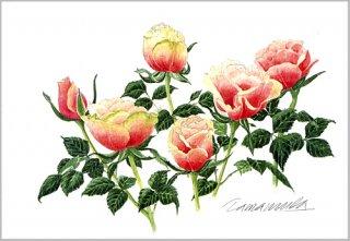 ポストカード「ピンク&グリーンローズ」.abc