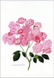 ポストカード「一枝のバラの花房」.abc