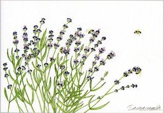 ポストカード「ラベンダーと5匹の蜜蜂」.abc