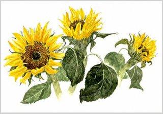 版画 「ヒマワリの3つの花」.abc