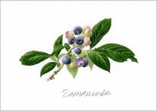 版画 「ガーデンのブルーベリー」.abc