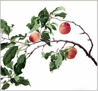 版画 「スモモの枝」.abc