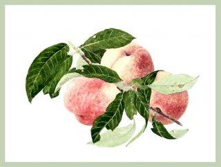 版画 「収穫された三つの桃」.abc