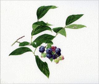 版画 「ブルーベリーの小枝」.abc