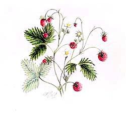 版画 「森のイチゴ」.abc