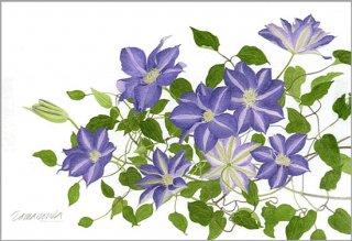 ポストカード「薄紫のクレマチス」.abc