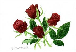 ポストカード「真紅のバラ」.abc