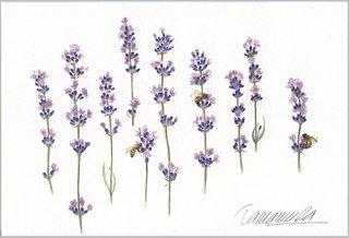 ポストカード「ラベンダーと三匹の蜜蜂」.abc