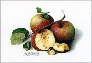 ポストカード「りんご」.abc