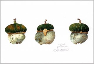 ポストカード「緑帽子のポチロン」.abc