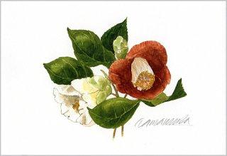 ポストカード「赤と白の椿の花」.abc