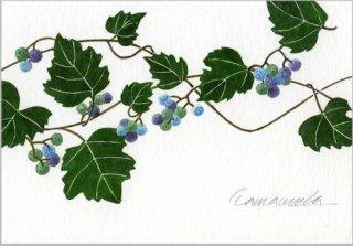 ポストカード「野葡萄」.abc