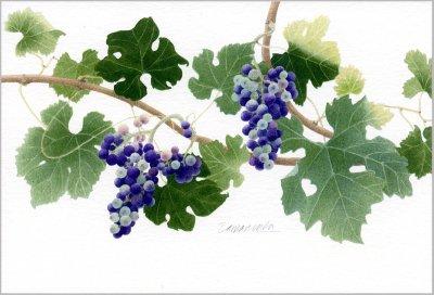 ポストカード「緑と紫のメルロー」.abc