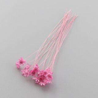 スターフラワーミニ ミニパック ピンク