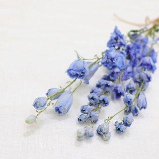 【花材】スタンダードデルフィニウム(ライトブルー)