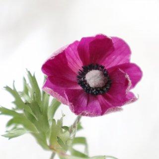 【はじめての方はこちら】生花のようなドライフラワー作り「フラワーシリカ・プロ」zoomオンラインレッスンセット