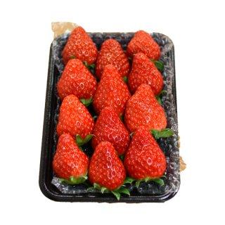 【8〜12粒/収穫出来次第発送】紅ほっぺ【4パック】