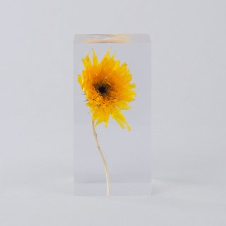Sunflower Van Gogh