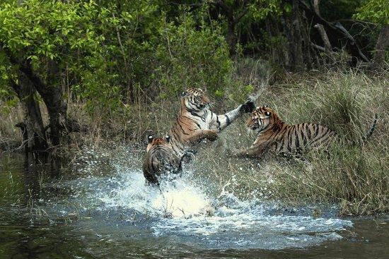 自然:写真家 秋山 知伸の世界! 写真集BIG CATSより写真をご紹介