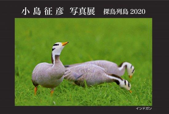 小島征彦 写真展「探鳥列島2020」 開催のお知らせ