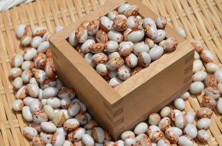 【新豆】令和2年北海道産とら豆<br>いんげん豆