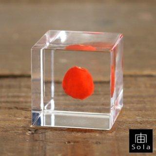 宙-sola- Sola cube ワイルーロ