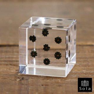 宙-sola- Sola cube ヨウシュヤマゴボウ