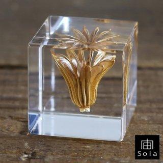 宙-sola- Sola cube ニゲラオリエンタリス